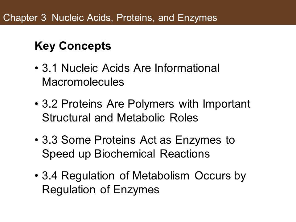 Chapter 3 Nucleic Acids, Proteins, and Enzymes
