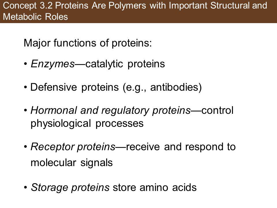 Major functions of proteins: Enzymes—catalytic proteins