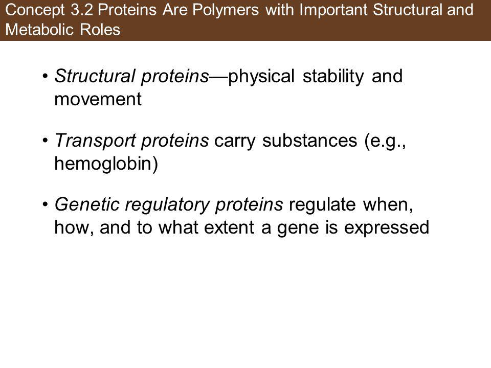 • Structural proteins—physical stability and movement