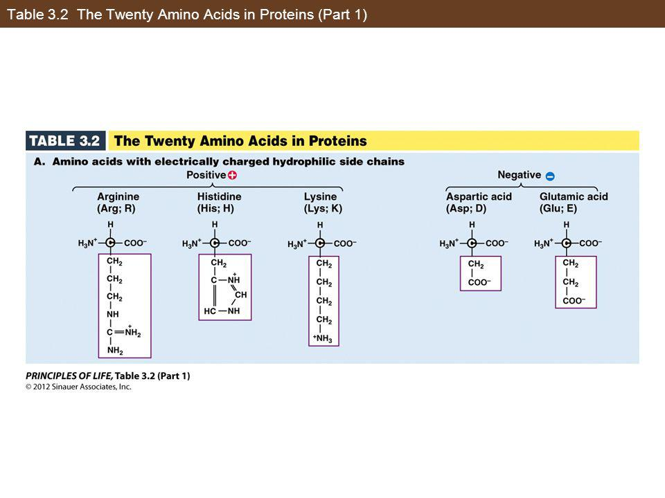 Table 3.2 The Twenty Amino Acids in Proteins (Part 1)