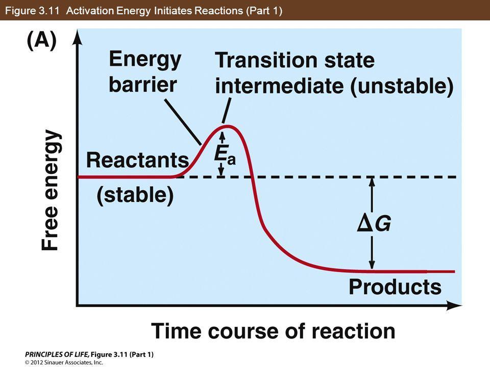 Figure 3.11 Activation Energy Initiates Reactions (Part 1)
