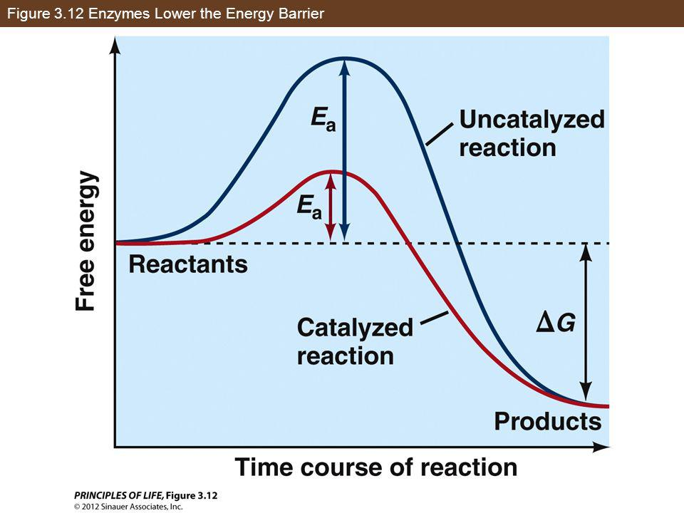 Figure 3.12 Enzymes Lower the Energy Barrier