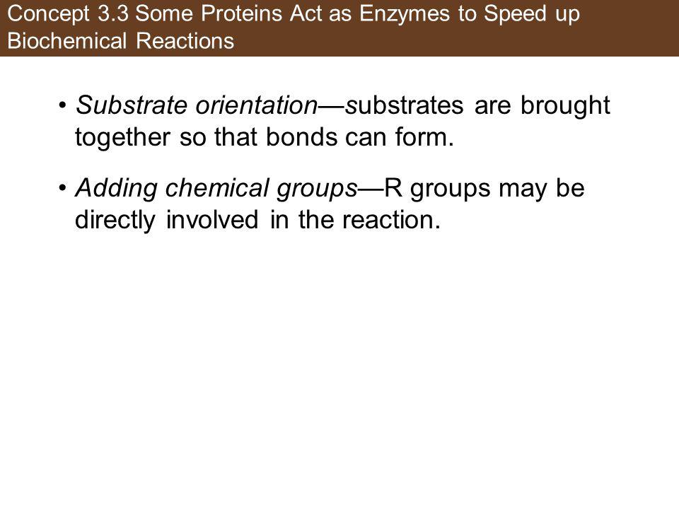 Concept 3.3 Some Proteins Act as Enzymes to Speed up Biochemical Reactions