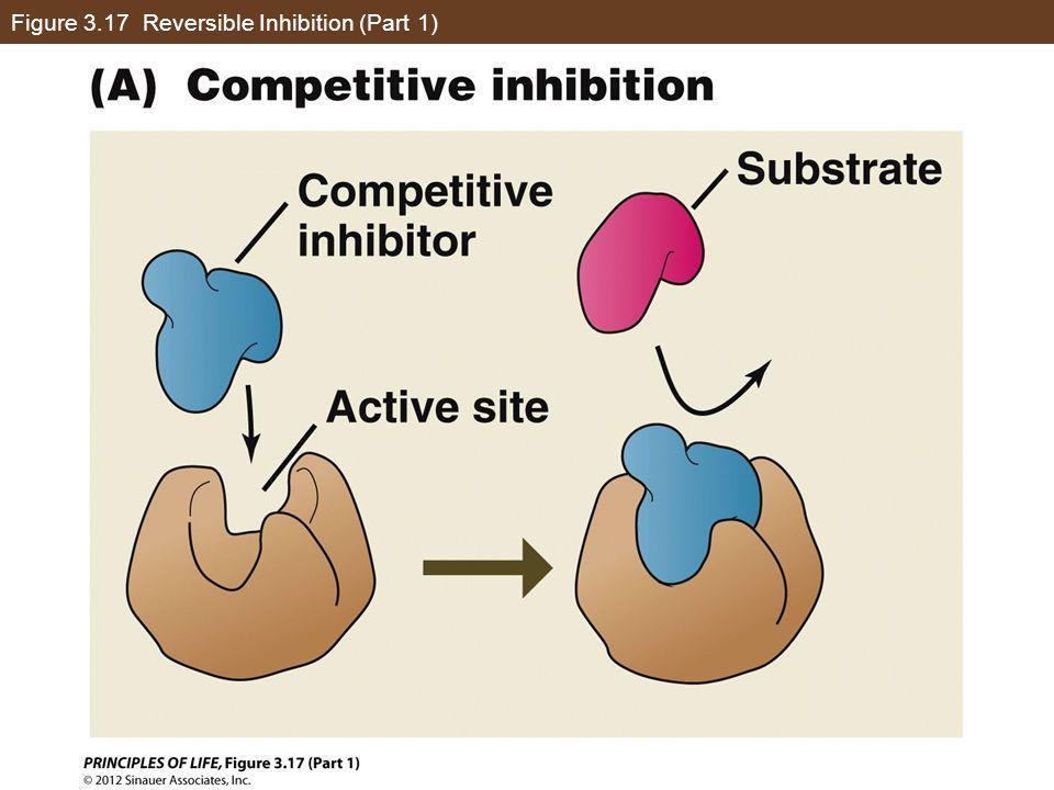 Figure 3.17 Reversible Inhibition (Part 1)