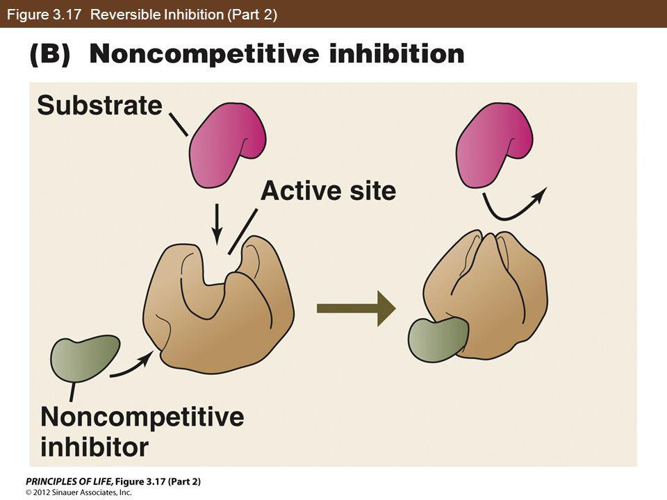 Figure 3.17 Reversible Inhibition (Part 2)