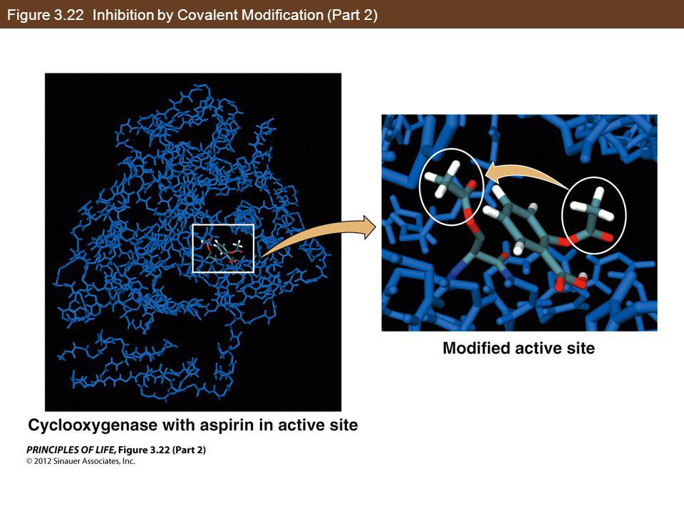Figure 3.22 Inhibition by Covalent Modification (Part 2)