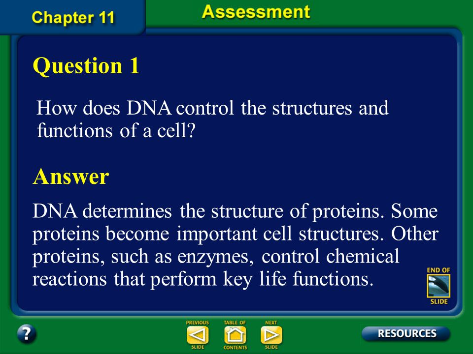 Question 1 How does DNA control the structures and functions of a cell Answer.