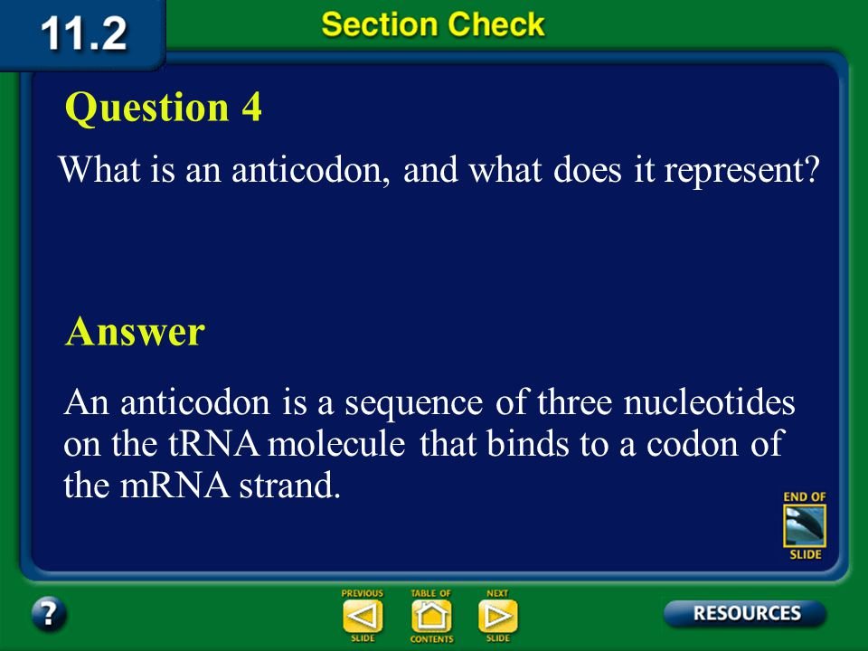 Question 4 Answer What is an anticodon, and what does it represent
