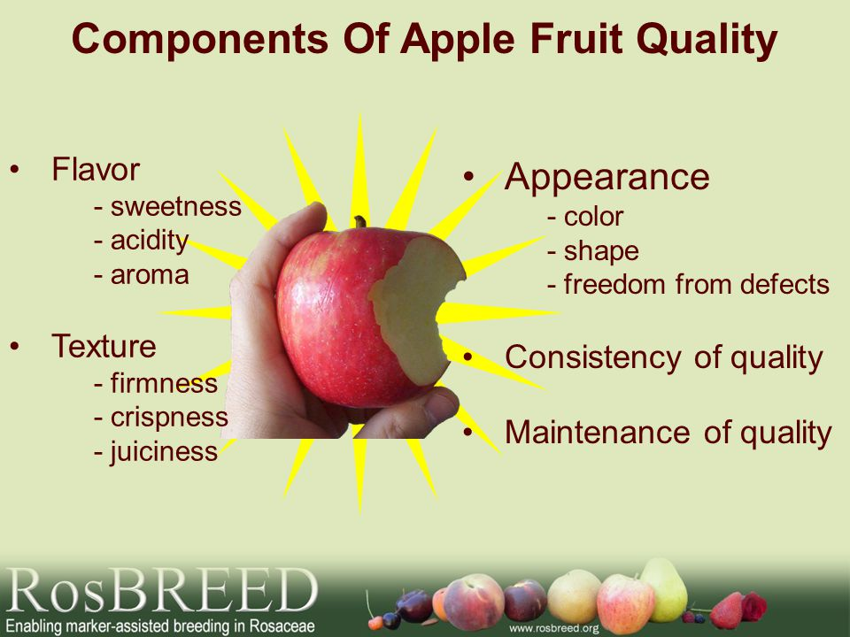 Components Of Apple Fruit Quality