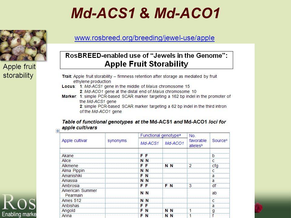 Md-ACS1 & Md-ACO1 www.rosbreed.org/breeding/jewel-use/apple