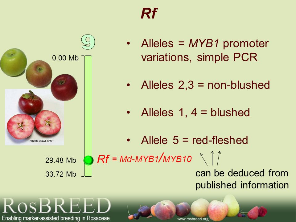 Rf 9 Alleles = MYB1 promoter variations, simple PCR