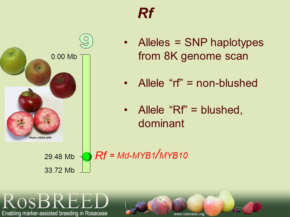 Rf 9 Alleles = SNP haplotypes from 8K genome scan