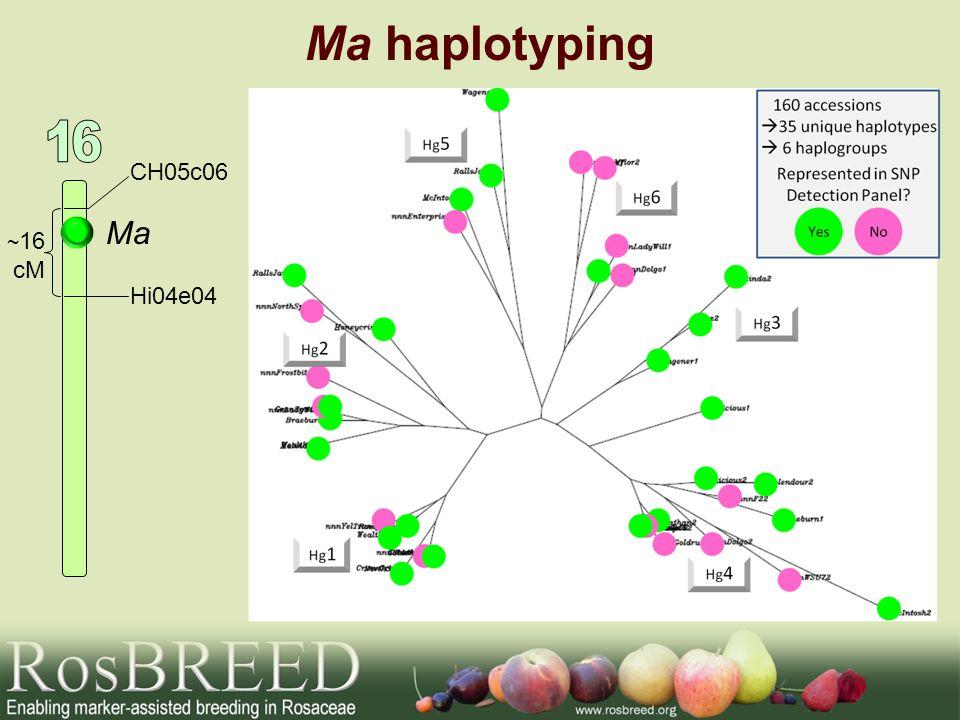 Ma haplotyping 16 CH05c06 Ma ~16 cM Hi04e04