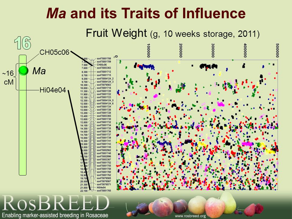 Ma and its Traits of Influence