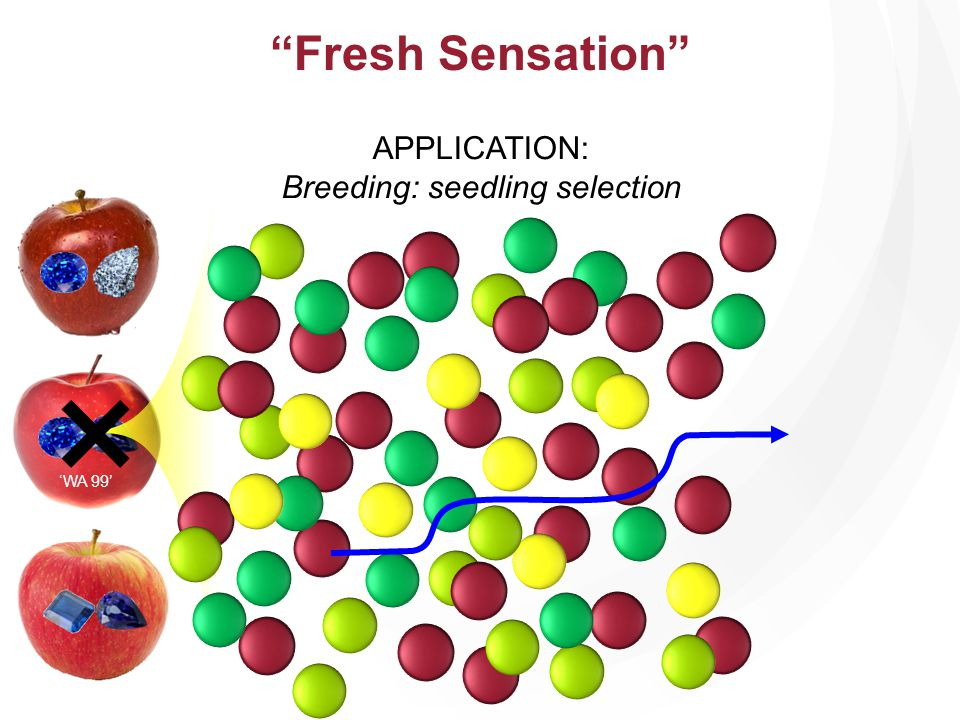Breeding: seedling selection