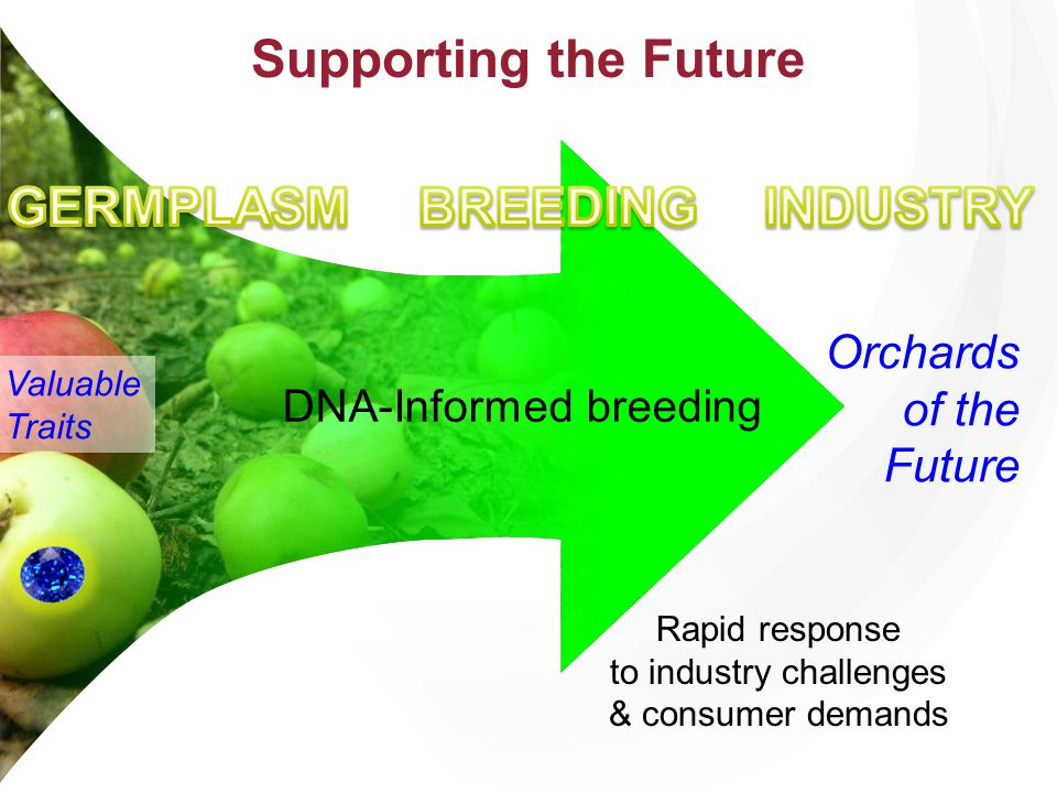 Supporting the Future GERMPLASM BREEDING INDUSTRY