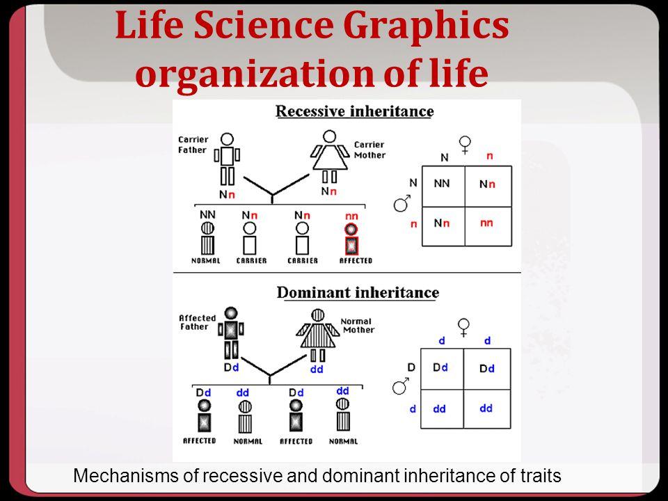 Life Science Graphics organization of life