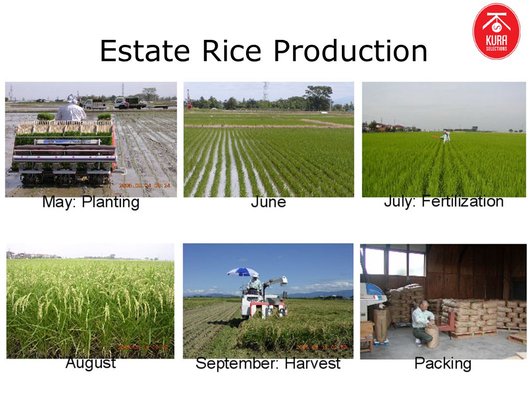 Estate Rice Production