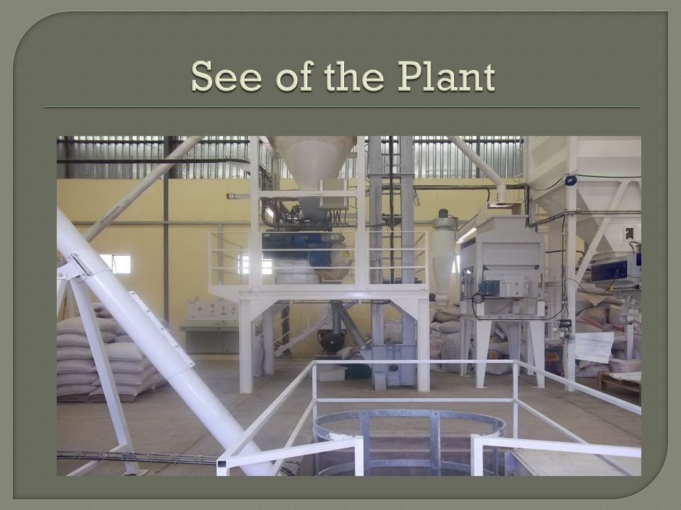 See of the Plant