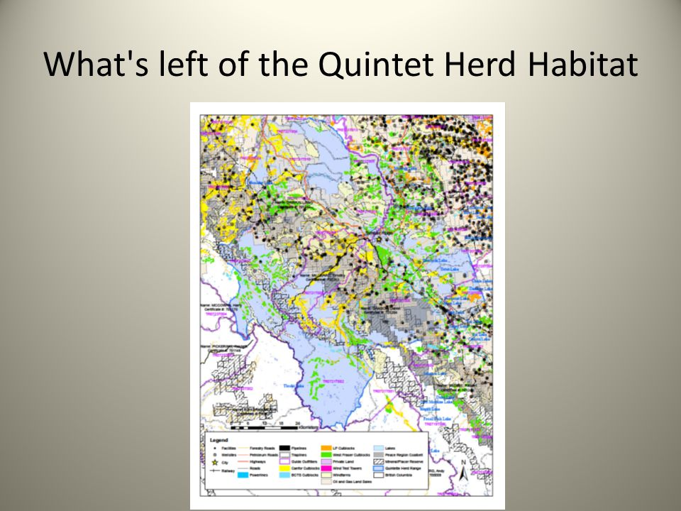 What s left of the Quintet Herd Habitat