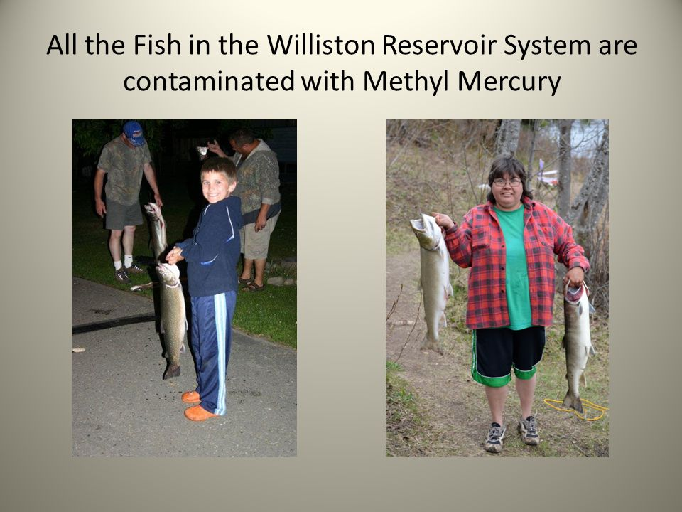All the Fish in the Williston Reservoir System are contaminated with Methyl Mercury