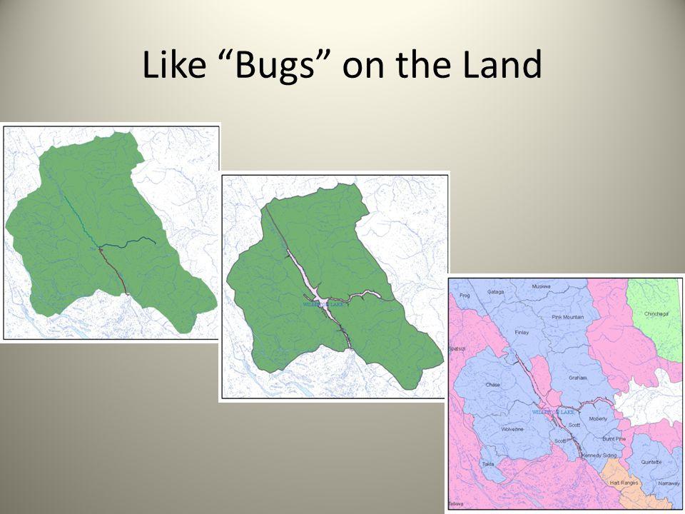 Like Bugs on the Land