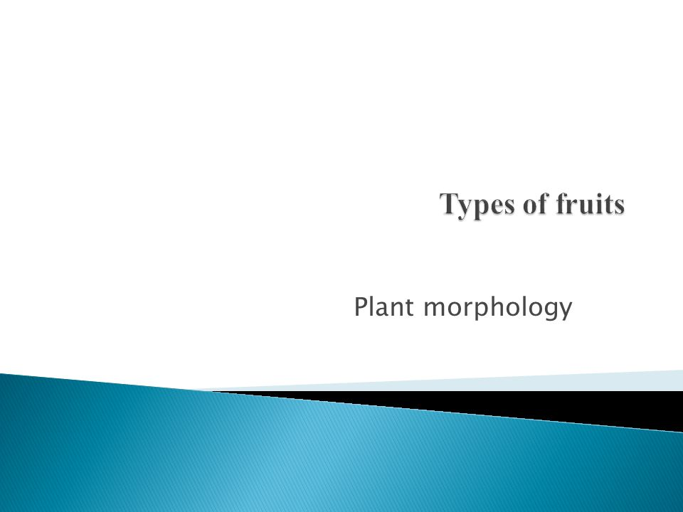 Types of fruits Plant morphology