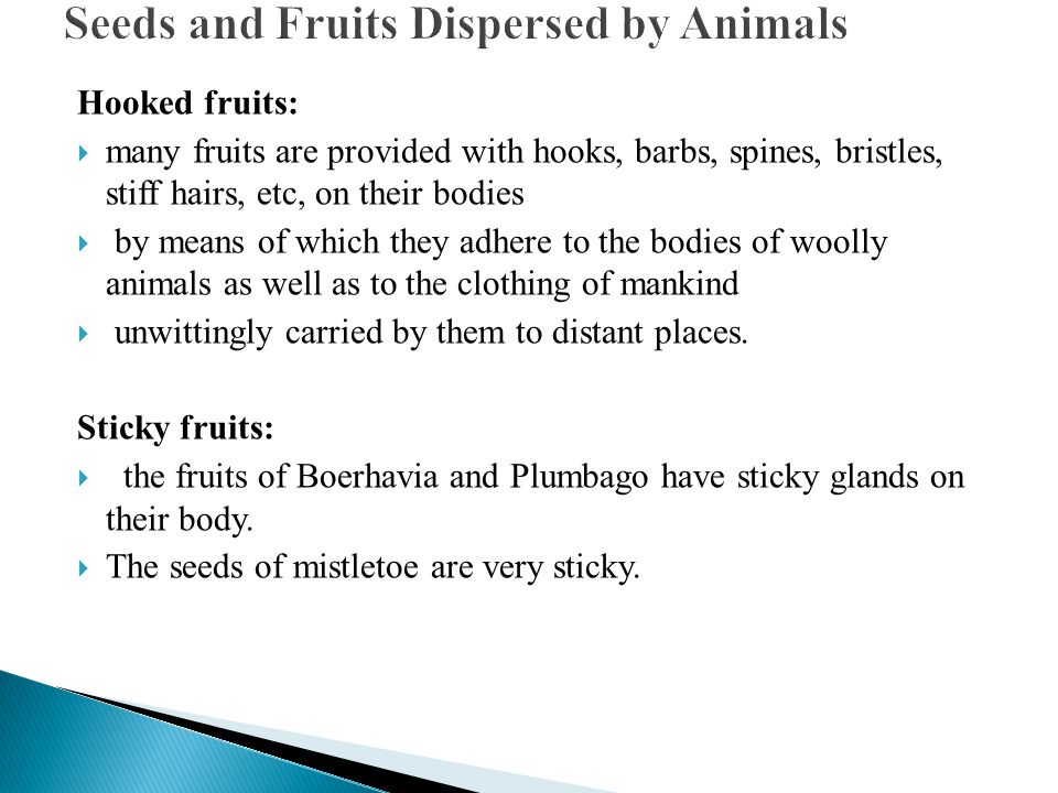 Seeds and Fruits Dispersed by Animals