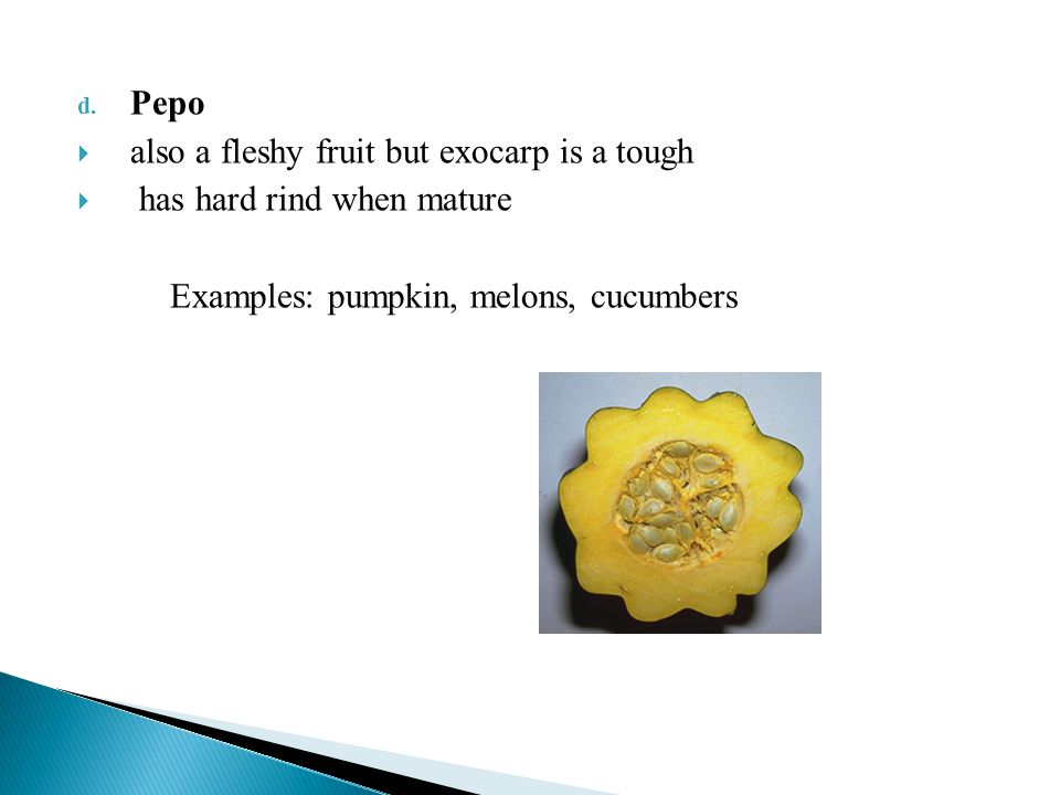 Pepo also a fleshy fruit but exocarp is a tough. has hard rind when mature.