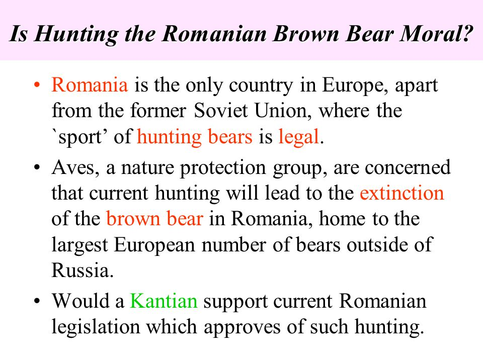 Is Hunting the Romanian Brown Bear Moral