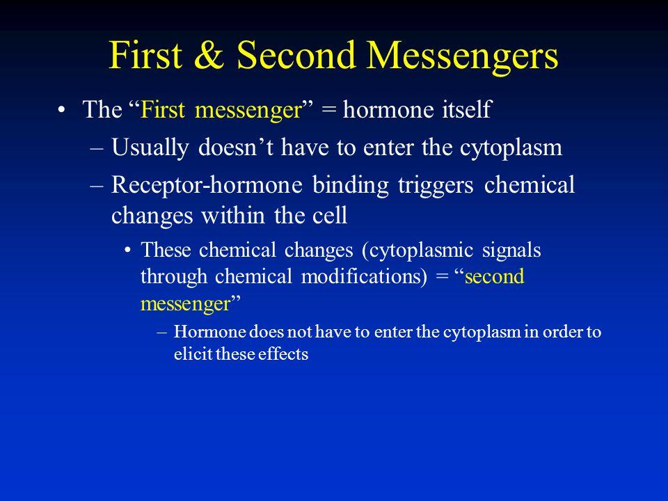 First & Second Messengers