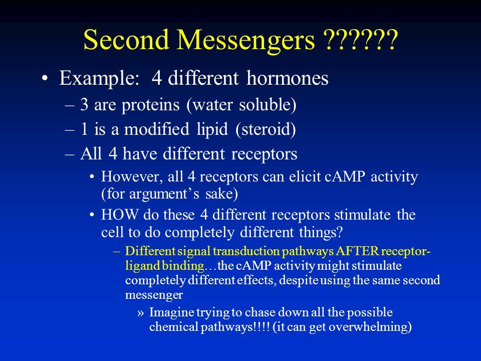Second Messengers Example: 4 different hormones