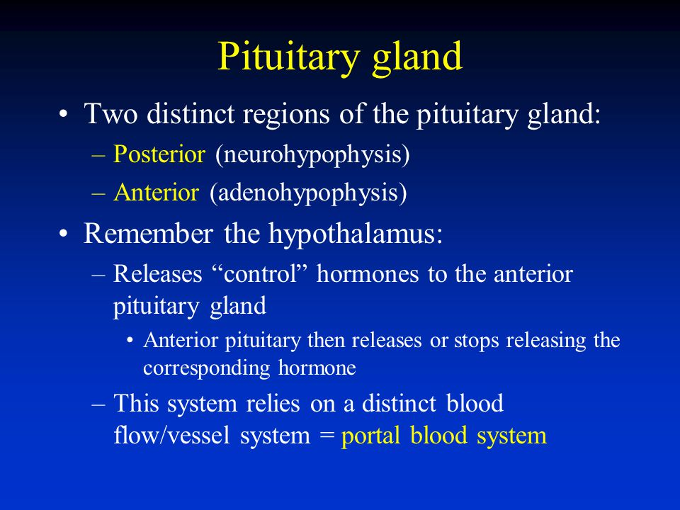 Pituitary gland Two distinct regions of the pituitary gland: