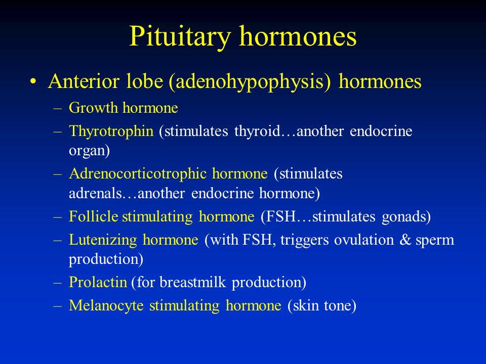 Pituitary hormones Anterior lobe (adenohypophysis) hormones