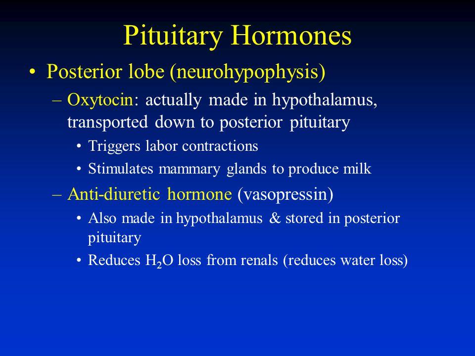 Pituitary Hormones Posterior lobe (neurohypophysis)