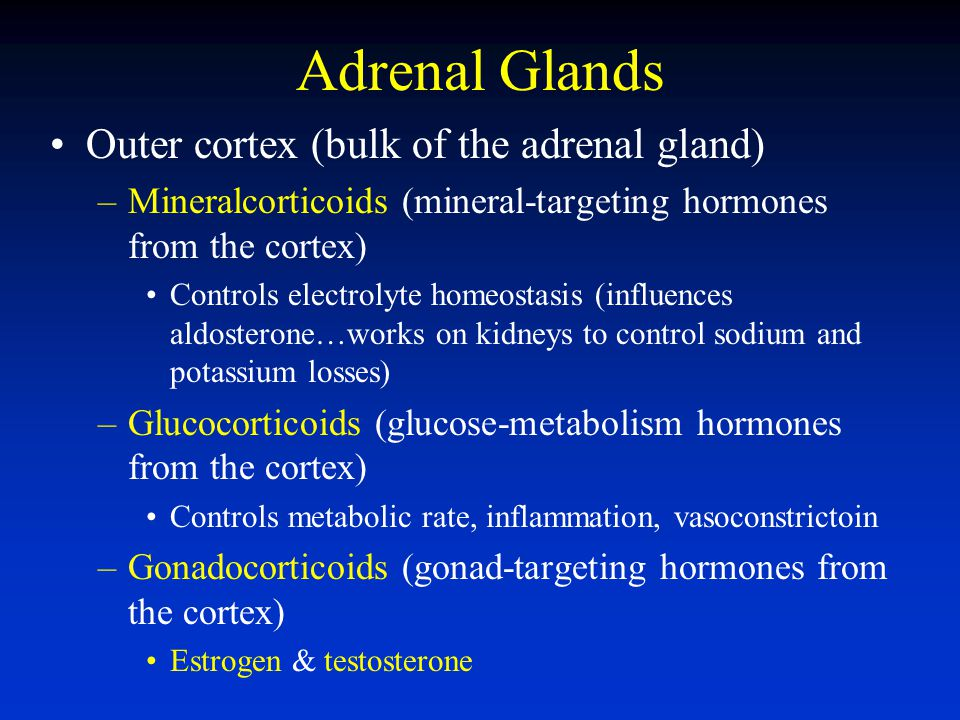 Adrenal Glands Outer cortex (bulk of the adrenal gland)