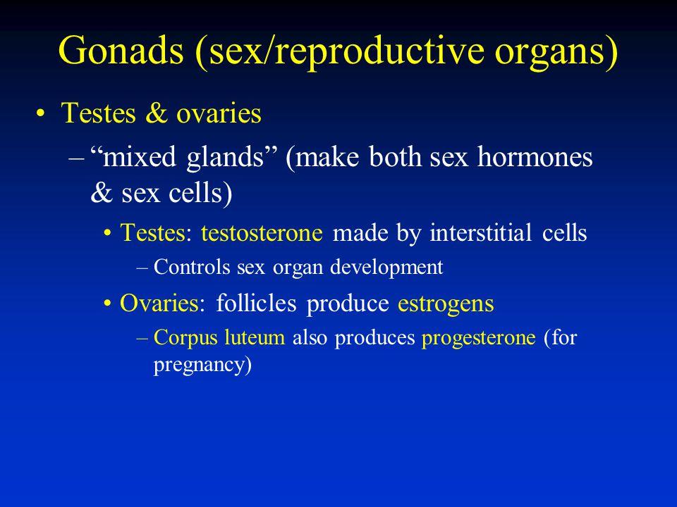 Gonads (sex/reproductive organs)