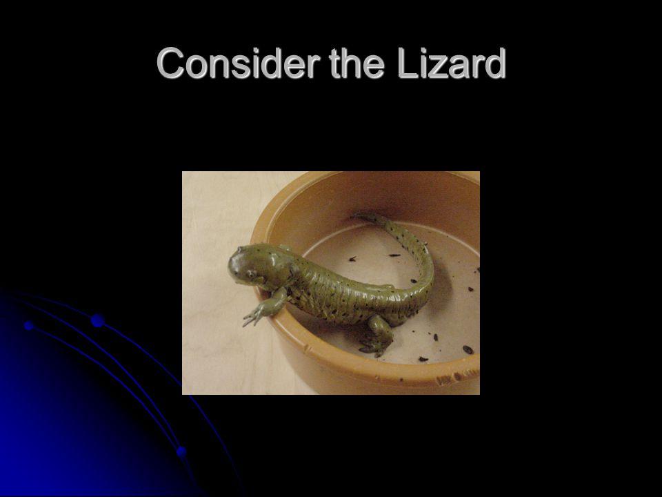 Consider the Lizard