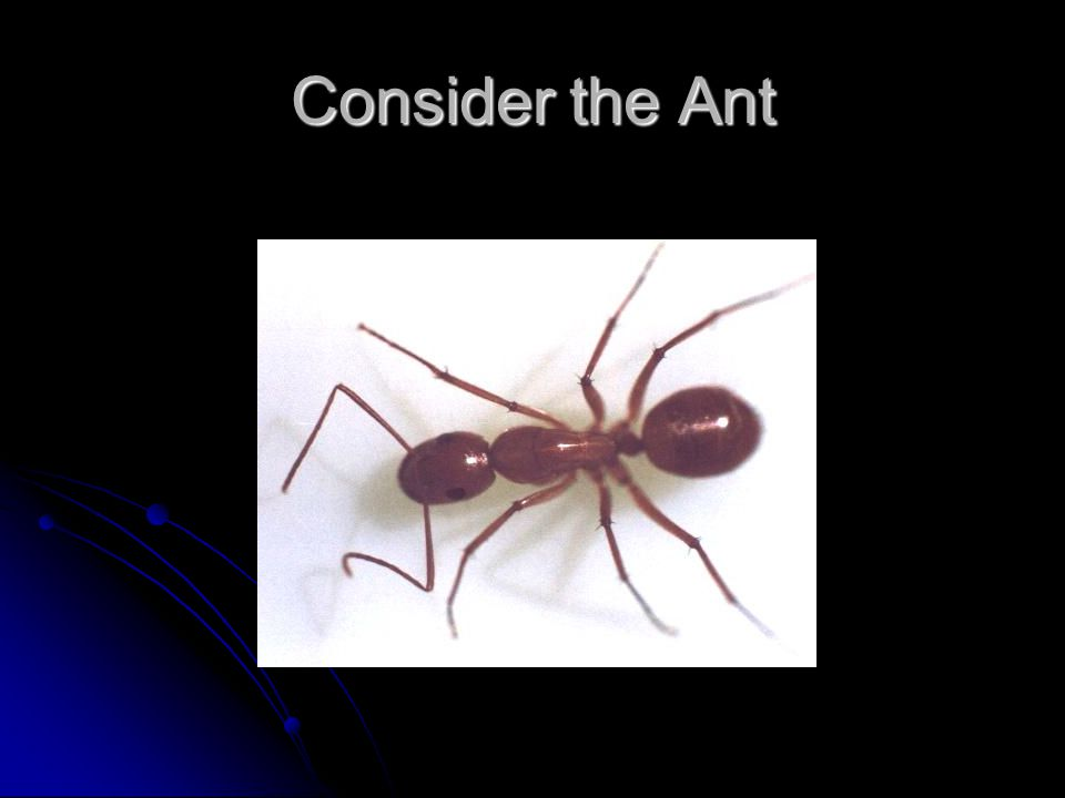 Consider the Ant
