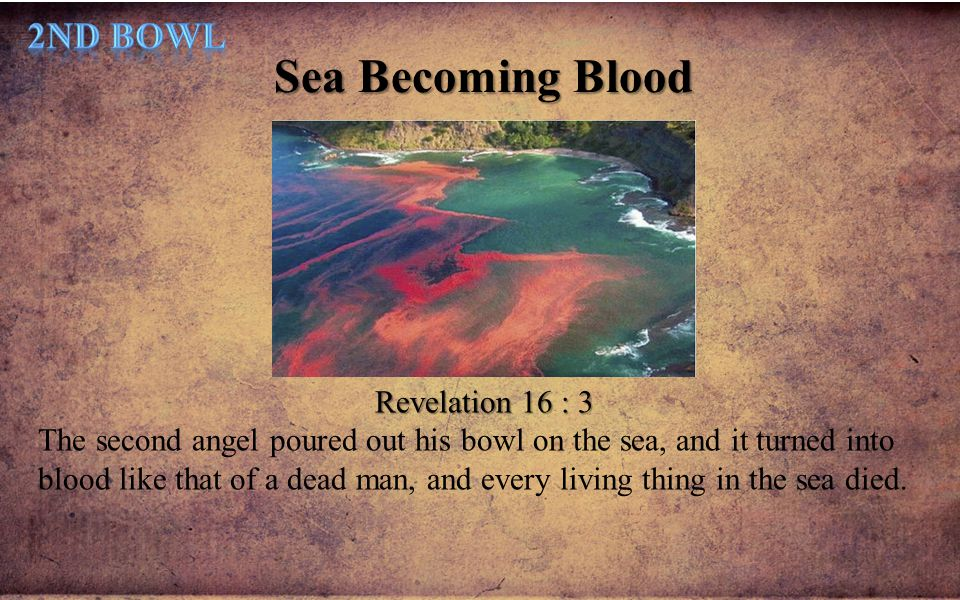 Sea Becoming Blood 2nd Bowl Revelation 16 : 3