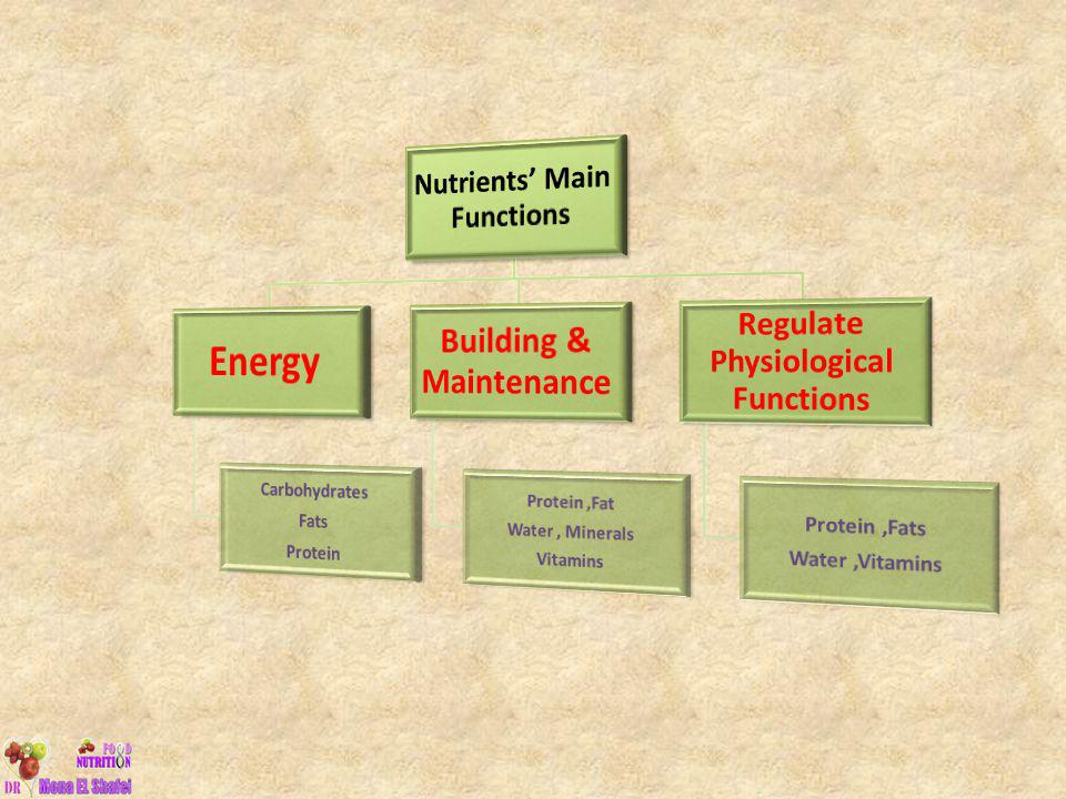 Energy Building & Maintenance Nutrients' Main Functions