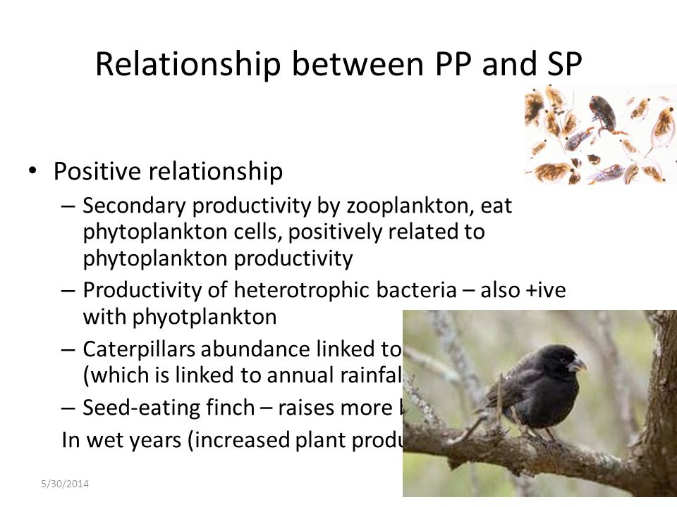 Relationship between PP and SP