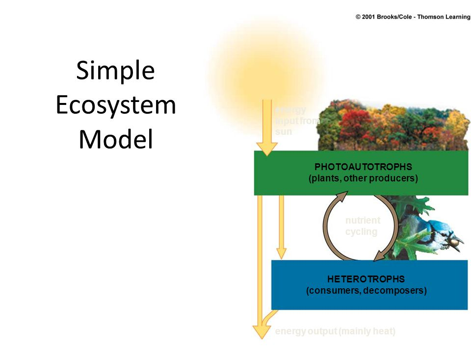 Simple Ecosystem Model