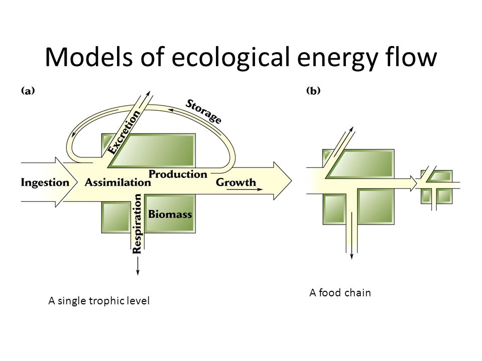 Models of ecological energy flow