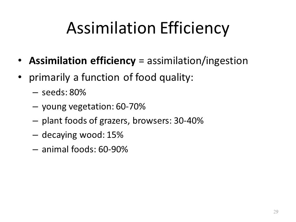 Assimilation Efficiency