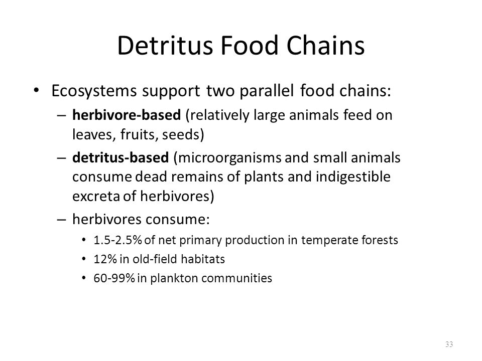 Detritus Food Chains Ecosystems support two parallel food chains: