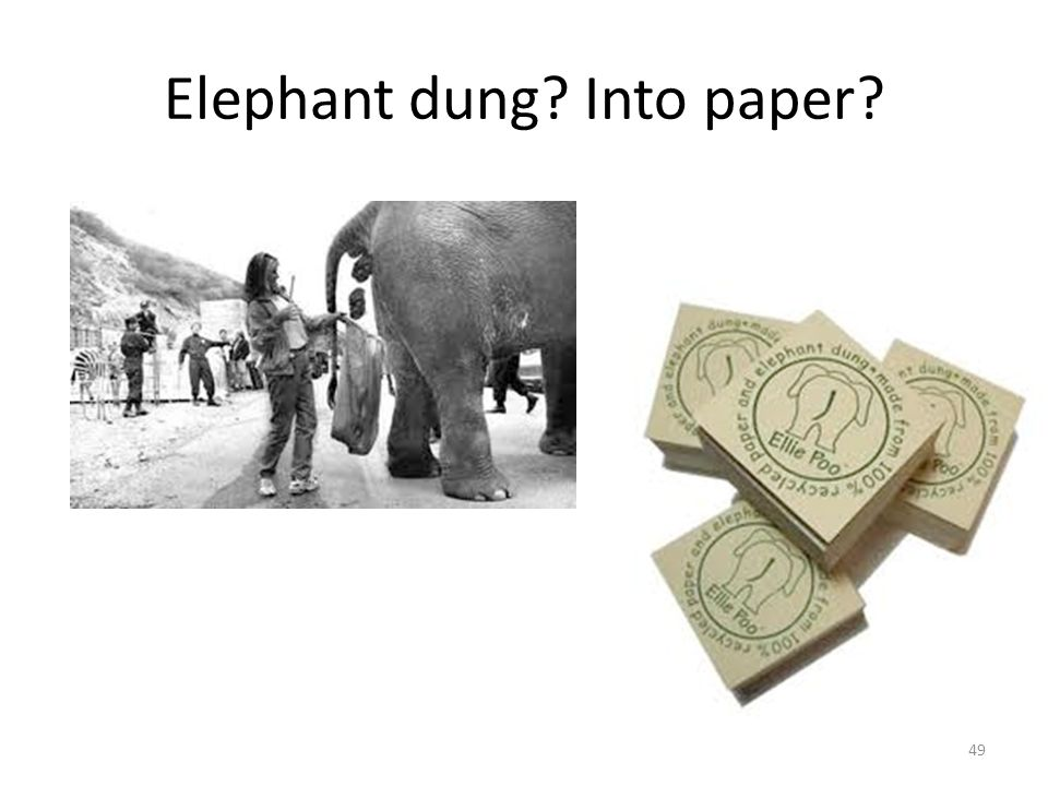 Elephant dung Into paper