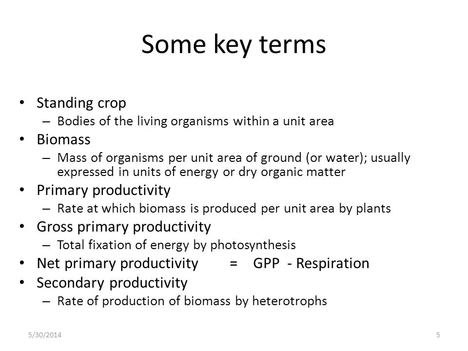 Some key terms Standing crop Biomass Primary productivity