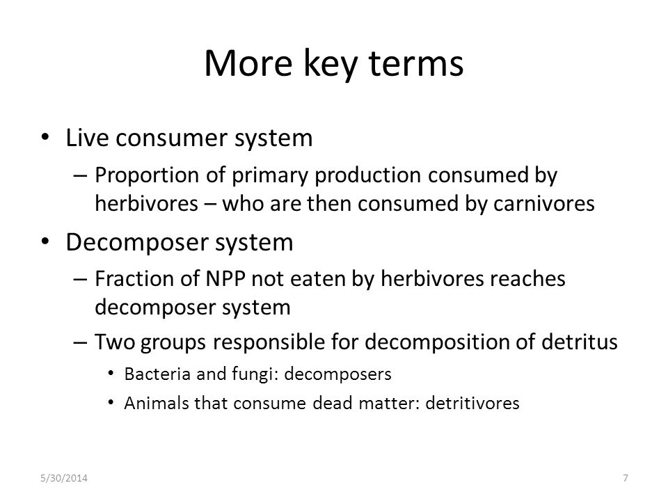 More key terms Live consumer system Decomposer system