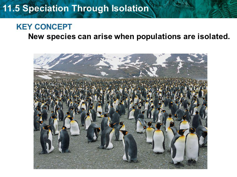 KEY CONCEPT New species can arise when populations are isolated.